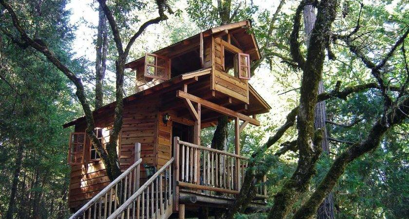 Amazing Tree Houses Everyone Wished They Had Growing