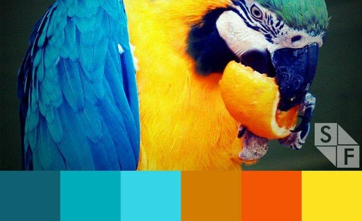 Best Beach Tropical Color Schemes