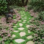 Best Ground Cover Flowers Plants Low Growing