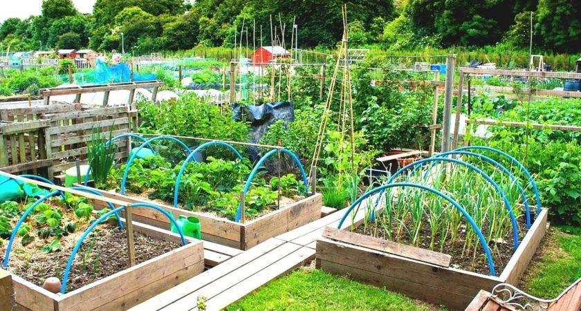 Best Tips Create Diy Vegetable Garden Wooden