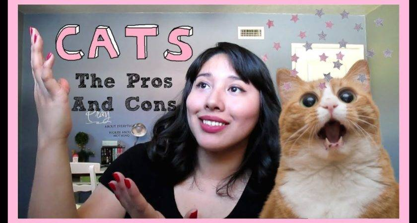 Cats Pros Cons Owning Them Youtube