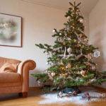 Christmas Tree Living Room Photograph