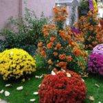 Colorful Home Decorating Fall Flowers Inspiring