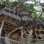 Coolest Treehouses Around World Fox News