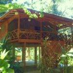 Custom Jungle House Ocean Houses Rent