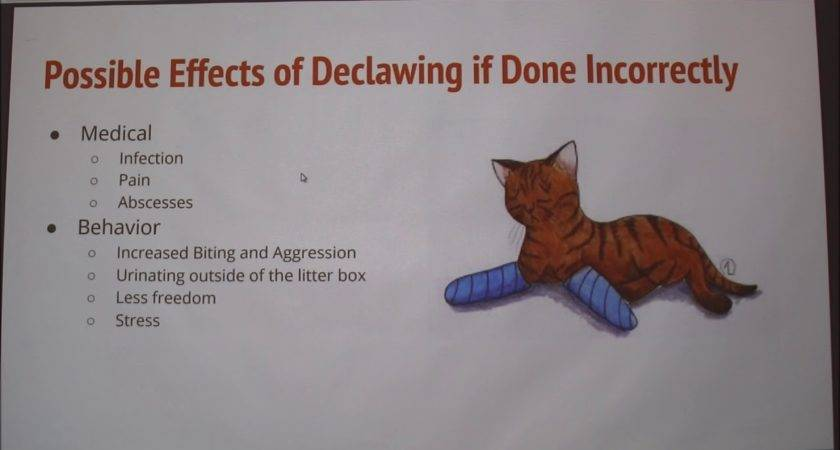 Declawing Cats Pros Cons Youtube