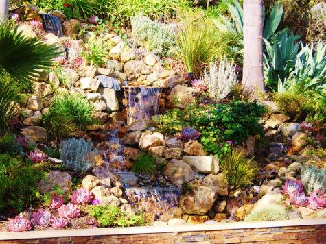 Drought Landscaping Ideas Tolerant
