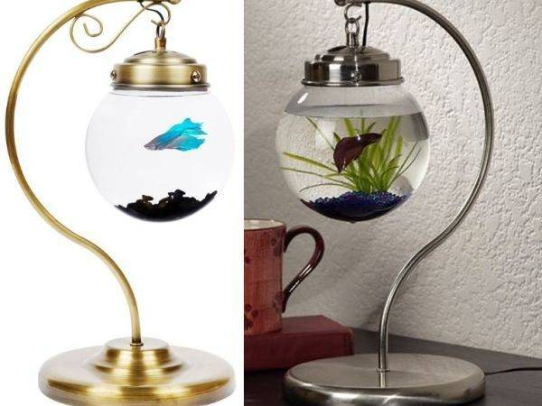 Fishbowl Bookends Home Design