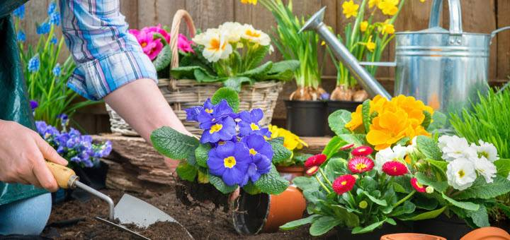 Five Tips Planning Your Spring Garden Shopathome