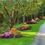Front Yard Driveway Landscaping Ideas Landscape