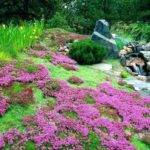 Ground Cover Ideas Types Flowering