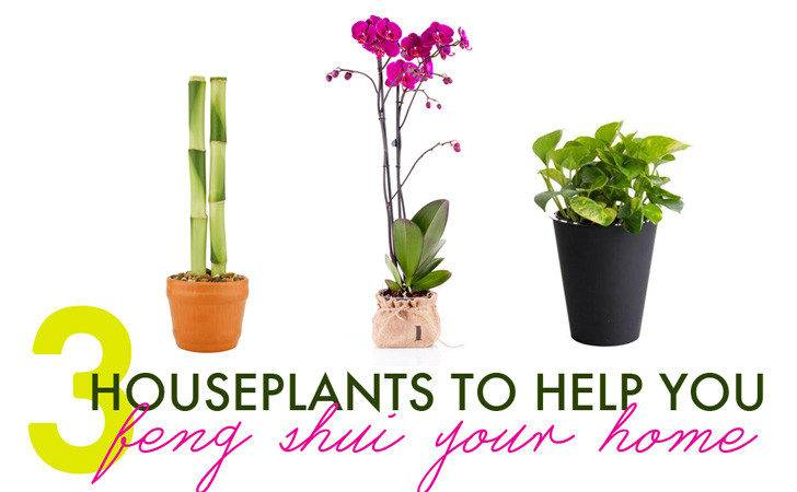 Houseplants Help Feng Shui Your Home