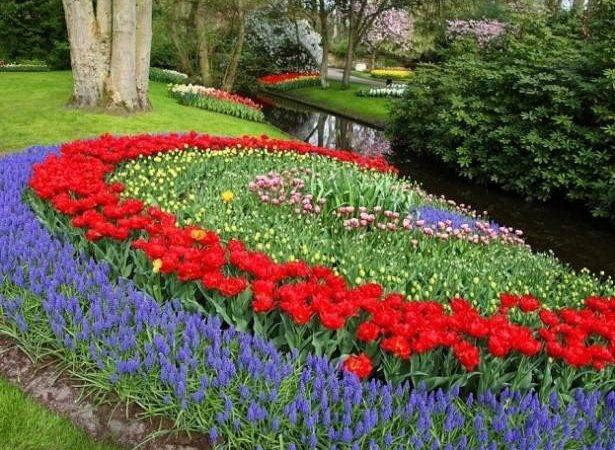 Ideas Planting Tulips Create Dazzling Accents