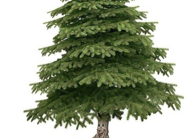 Keep Your Christmas Tree Alive Longer Right Care