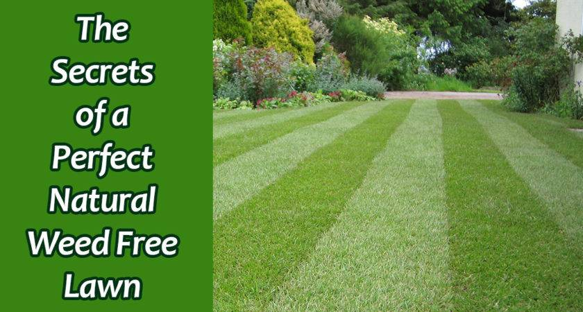 Kill Weeds Grass Without Killing