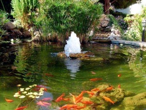 Koi Pond Design Ideas Add Japanese Garden Feature
