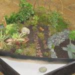 Mini Zen Garden Ideas Best Design