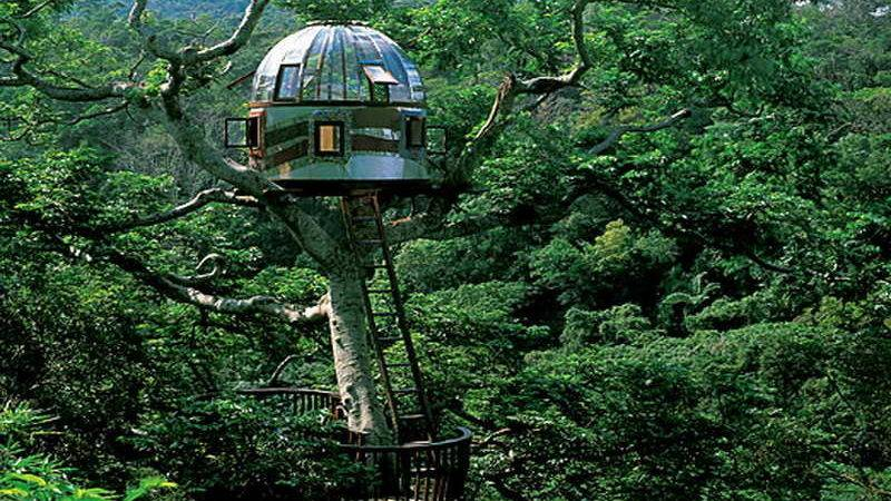 Miscellaneous Tree House Amazing Glass Dome