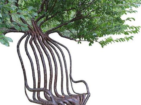 Pooktre Tree Shapers