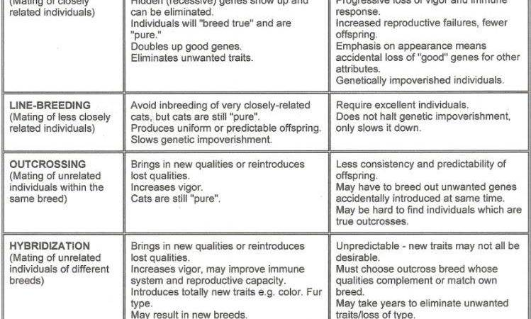 Pros Cons Genetically Modified Foods Chart Food
