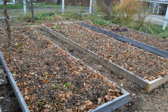 Replace Your Lawn Food Production Northern Homestead