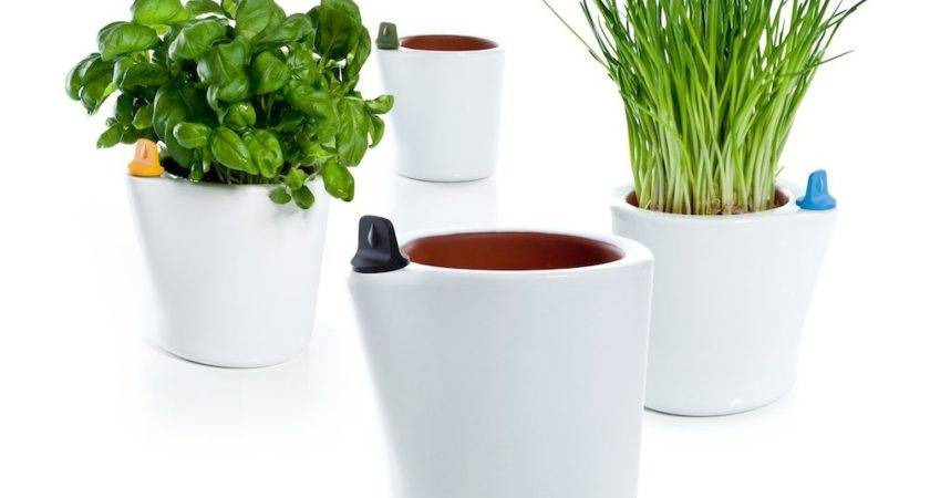 Self Watering Flower Pots Ippinka