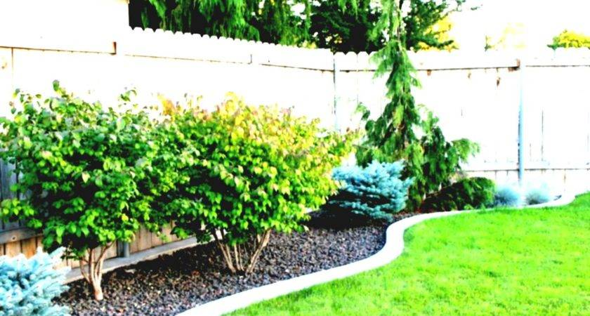 Small Backyard Design Ideas Budget