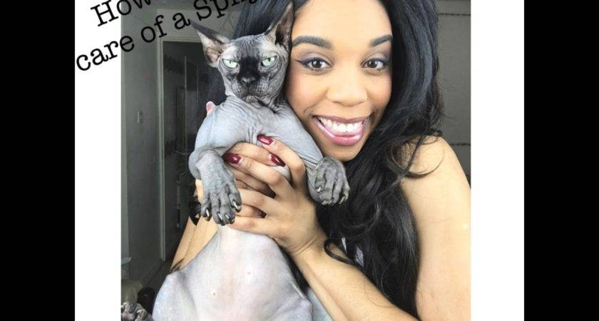 Sphynx Cat Care Pros Cons Youtube