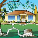 Termites Control Sydney Detection Safe Eradication