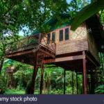Tree Houses Specialty Our Jungle House Lodge