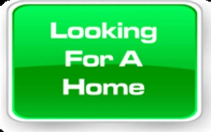 Wanted House Rent Bolton Ontario