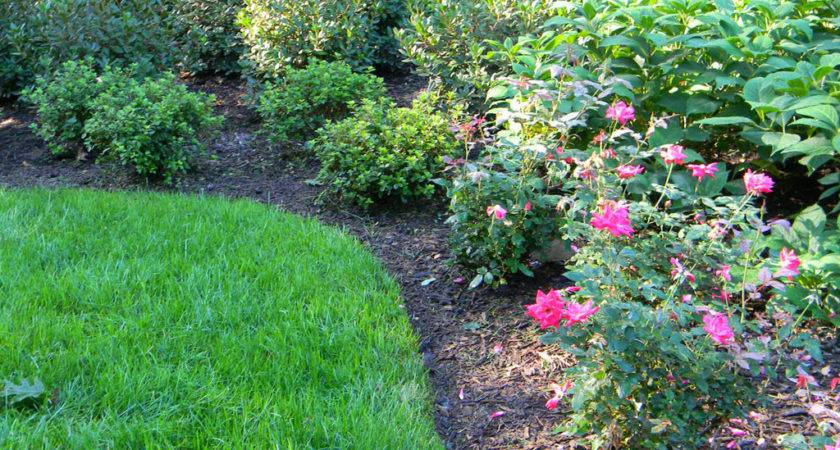 Weed Control Duke Landscaping