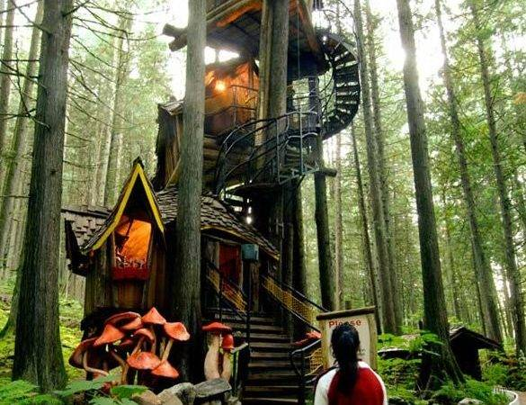 World Coolest Tree Houses